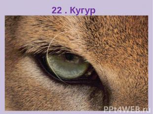 22 . Кугур