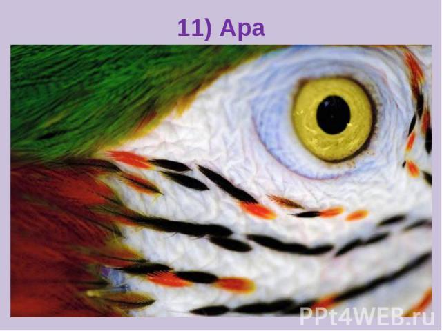 11) Ара