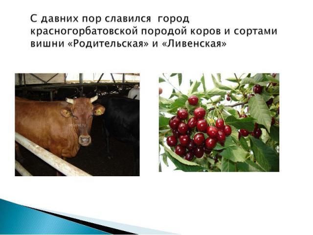 С давних пор славился город красногорбатовской породой коров и сортами вишни «Родительская» и «Ливенская»