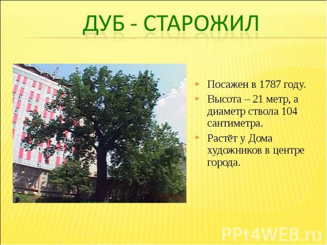 Посажен в 1787 году. Высота – 21 метр, а диаметр ствола 104 сантиметра. Растёт у Дома художников в центре города.