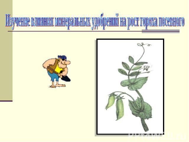 Изучение влияния минеральных удобрений на рост гороха посевного