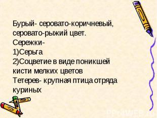 Бурый- серовато-коричневый, серовато-рыжий цвет. Сережки- 1)Серьга 2)Соцветие в