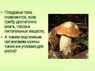 Плодовые тела появляются, если грибу достаточно влаги, тепла и питательных вещес