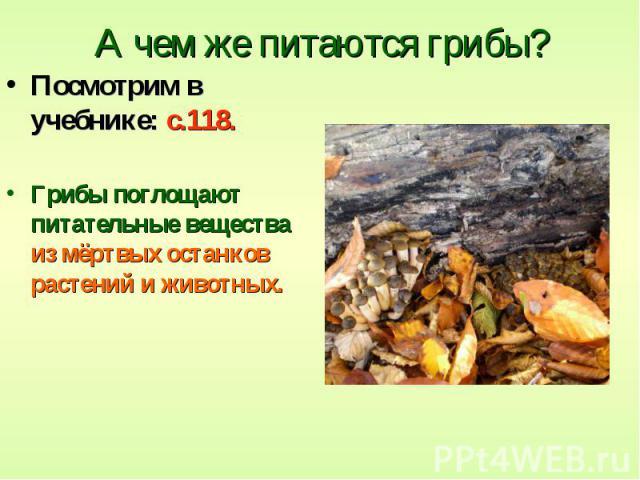 А чем же питаются грибы? Посмотрим в учебнике: с.118. Грибы поглощают питательные вещества из мёртвых останков растений и животных.