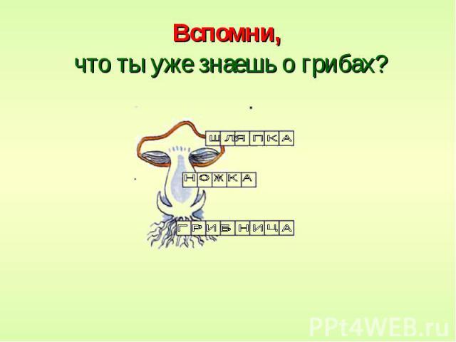 Вспомни, что ты уже знаешь о грибах?
