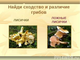 Найди сходство и различие грибов ЛИСИЧКИ ЛОЖНЫЕ ЛИСИЧКИ