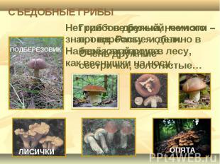 СЪЕДОБНЫЕ ГРИБЫ Нет грибов дружней, чем эти – знают взрослые и дети. На пеньках