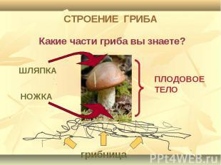 СТРОЕНИЕ ГРИБА Какие части гриба вы знаете?