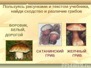 Пользуясь рисунками и текстом учебника, найди сходство и различие грибов БОРОВИК