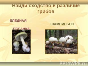 Найди сходство и различие грибов БЛЕДНАЯ ПОГАНКА ШАМПИНЬОН