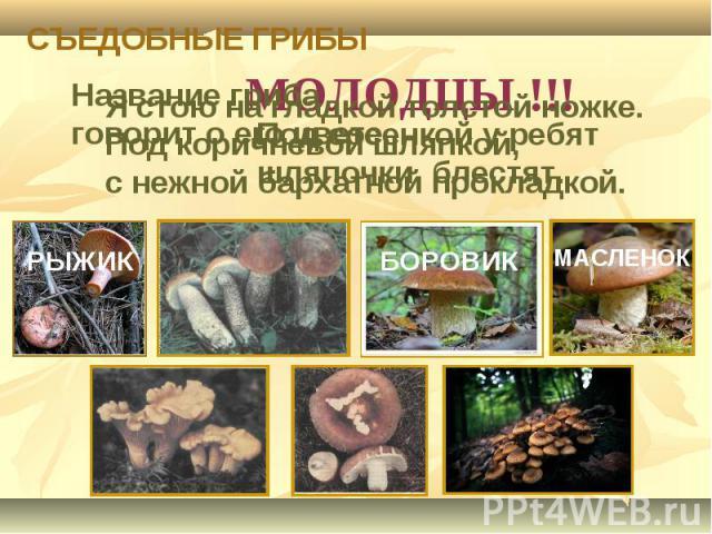 СЪЕДОБНЫЕ ГРИБЫ Название гриба говорит о его цвете. Под сосенкой у ребят шляпочки блестят.