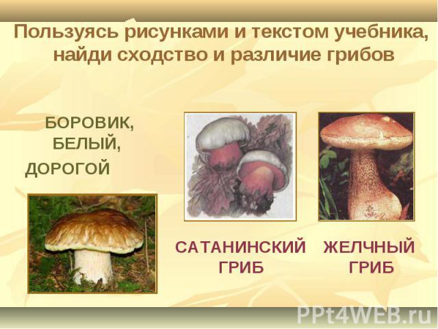 Пользуясь рисунками и текстом учебника, найди сходство и различие грибов БОРОВИК, БЕЛЫЙ, ДОРОГОЙ САТАНИНСКИЙ ГРИБ ЖЕЛЧНЫЙ ГРИБ