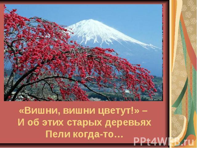 «Вишни, вишни цветут!» – И об этих старых деревьях Пели когда-то…