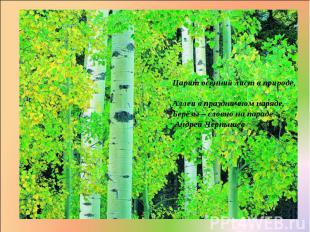 Царит осенний лист в природе, Аллеи в праздничном наряде, Берёзы – словно на пар