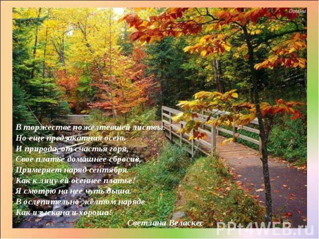 В торжестве пожелтевшей листвы. Но еще предзакатная осень И природа, от счастья горя, Свое платье домашнее сбросив, Примеряет наряд сентября. Как к лицу ей осеннее платье! Я смотрю на нее чуть дыша. В ослепительно желтом наряде Как изыскана и хороша…