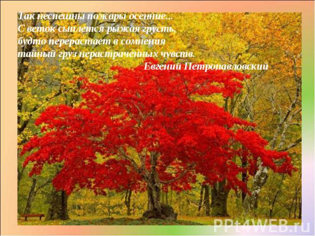 Так неспешны пожары осенние... С веток сыплется рыжая грусть, будто перерастает в сомнения тайный груз нерастраченных чувств. Евгений Петропавловский