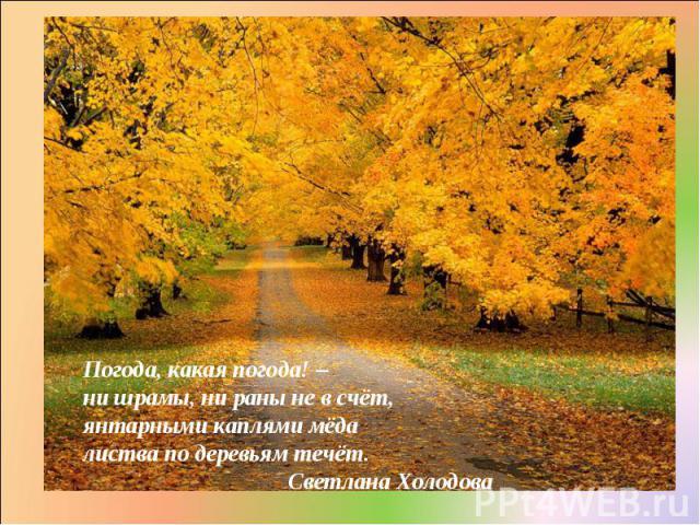Погода, какая погода! – ни шрамы, ни раны не в счёт, янтарными каплями мёда листва по деревьям течёт. Светлана Холодова