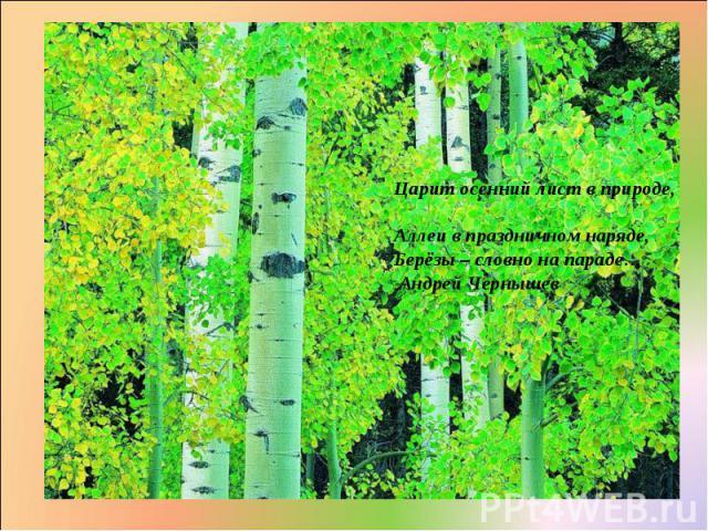 Царит осенний лист в природе, Аллеи в праздничном наряде, Берёзы – словно на параде… Андрей Чернышев