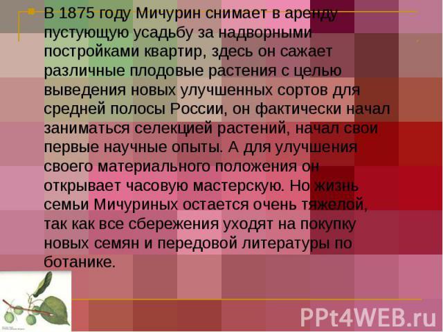 В 1875 году Мичурин снимает в аренду пустующую усадьбу за надворными постройками квартир, здесь он сажает различные плодовые растения с целью выведения новых улучшенных сортов для средней полосы России, он фактически начал заниматься селекцией расте…