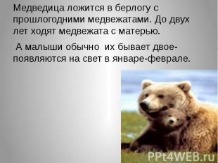 Медведица ложится в берлогу с прошлогодними медвежатами. До двух лет ходят медве