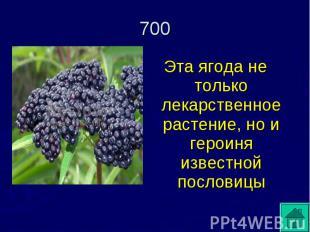 Эта ягода не только лекарственное растение, но и героиня известной пословицы