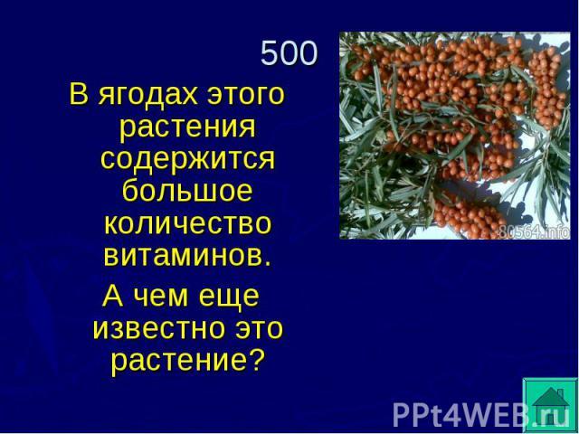 В ягодах этого растения содержится большое количество витаминов. А чем еще известно это растение?