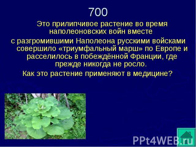 Это прилипчивое растение во время наполеоновских войн вместе с разгромившими Наполеона русскими войсками совершило «триумфальный марш» по Европе и расселилось в побеждённой Франции, где прежде никогда не росло. Как это растение применяют в медицине?