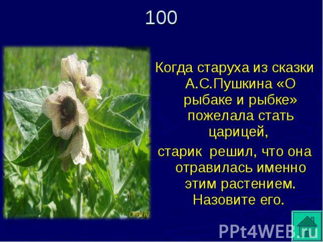 Когда старуха из сказки А.С.Пушкина «О рыбаке и рыбке» пожелала стать царицей, старик решил, что она отравилась именно этим растением. Назовите его.