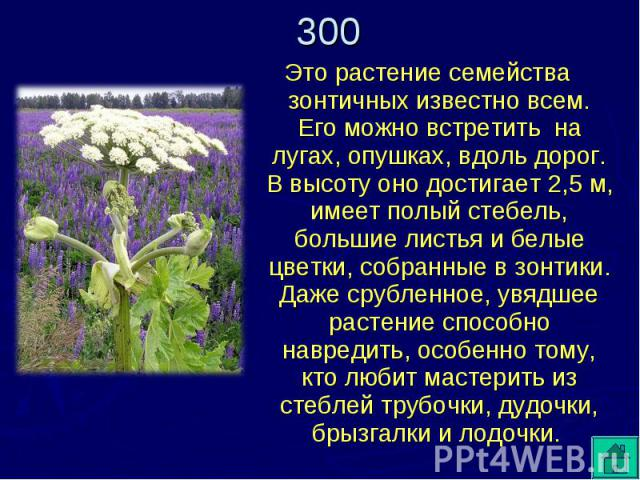 Это растение семейства зонтичных известно всем. Его можно встретить на лугах, опушках, вдоль дорог. В высоту оно достигает 2,5 м, имеет полый стебель, большие листья и белые цветки, собранные в зонтики. Даже срубленное, увядшее растение способно нав…