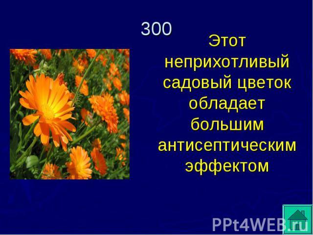 Этот неприхотливый садовый цветок обладает большим антисептическим эффектом