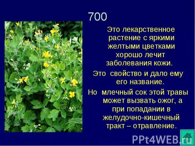 Это лекарственное растение с яркими желтыми цветками хорошо лечит заболевания кожи. Это свойство и дало ему его название. Но млечный сок этой травы может вызвать ожог, а при попадании в желудочно-кишечный тракт – отравление.