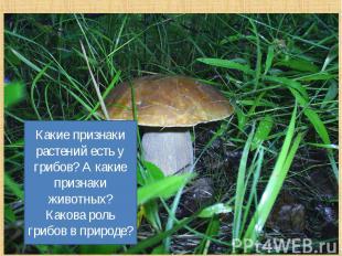 Какие признаки растений есть у грибов? А какие признаки животных? Какова роль гр