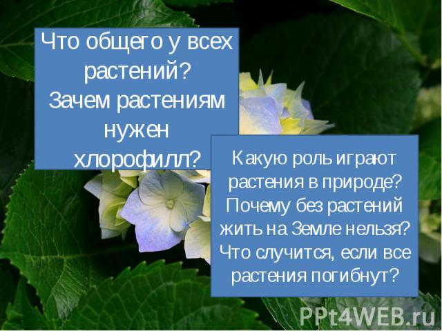 Что общего у всех растений? Зачем растениям нужен хлорофилл? Какую роль играют растения в природе? Почему без растений жить на Земле нельзя? Что случится, если все растения погибнут?