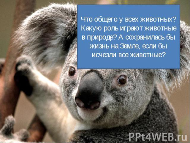Что общего у всех животных? Какую роль играют животные в природе? А сохранилась бы жизнь на Земле, если бы исчезли все животные?