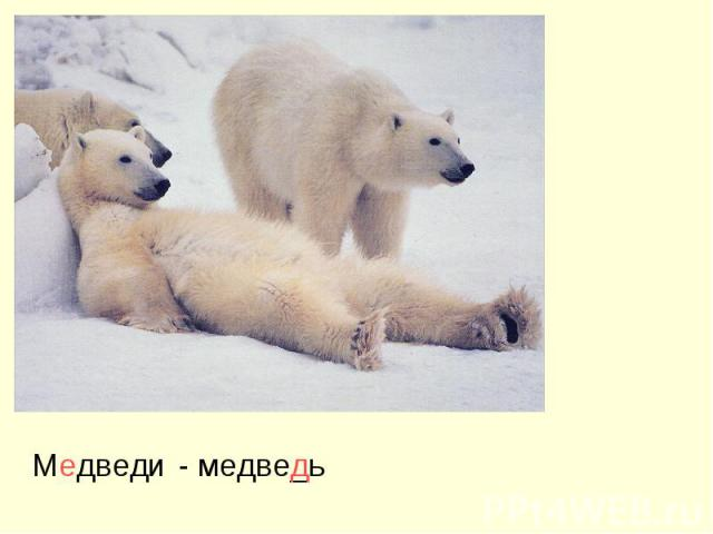 Медведи - медве_ь