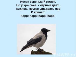 Носит серенький жилет, Но у крыльев - чёрный цвет. Видишь, кружат двадцать пар И