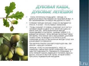 Дубовая каша, Дубовые лепёшки Очень питательны плоды дуба – жёлуди, но дубильные