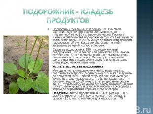 Подорожник – кладезь продуктовПодорожник, тушенный сзеленью: 200 глистьев раст