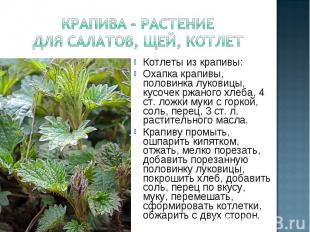 крапива – растение для салатов, щей, котлетКотлеты из крапивы: Охапка крапивы, п