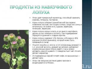 Продукты из навязчивого лопуха Лопух даёт прекрасный корнеплод, способный замени