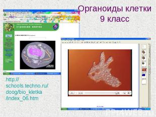 Органоиды клетки 9 классhttp://schools.techno.ru/doog/bio_kletka/index_06.htm