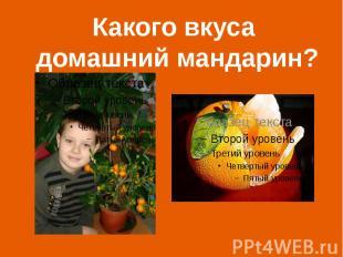 Какого вкуса домашний мандарин?