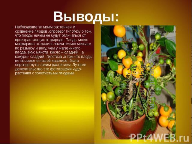 Выводы: Наблюдение за моим растением и сравнение плодов ,опроверг гипотезу о том, что плоды ничем не будут отличаться от произрастающих в природе. Плоды моего мандарина оказались значительно меньше по размеру и весу, чем у магазинного плода, вкус мя…
