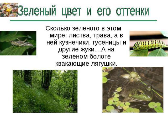 Зеленый цвет и его оттенки Сколько зеленого в этом мире: листва, трава, а в ней кузнечики, гусеницы и другие жуки…А на зеленом болоте квакающие лягушки.