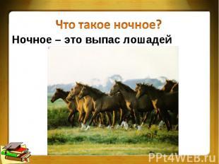 Что такое ночное?Ночное – это выпас лошадей