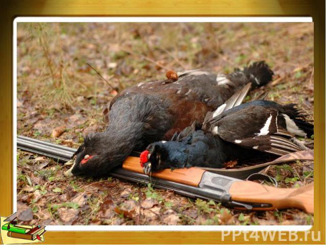 добываемые охотой птицы и звери, мясо которых употребляется в пищу. род птиц семейства тетеревиных