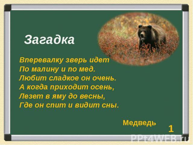 Загадка Вперевалку зверь идет По малину и по мед. Любит сладкое он очень. А когда приходит осень, Лезет в яму до весны, Где он спит и видит сны.