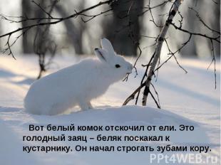 Вот белый комок отскочил от ели. Это голодный заяц – беляк поскакал к кустарнику