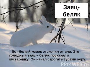 Заяц-беляк Вот белый комок отскочил от ели. Это голодный заяц – беляк поскакал к