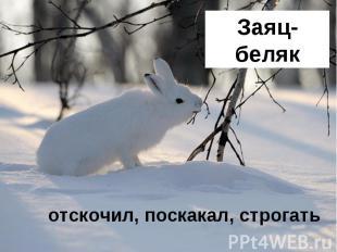 Заяц-беляк отскочил, поскакал, строгать
